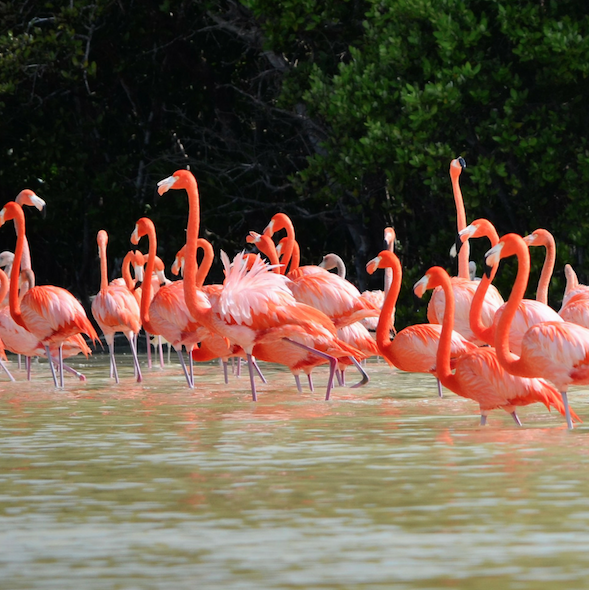 Celestun, Yucatan (flamingo sanctuary) via TravelTheYucatan.com