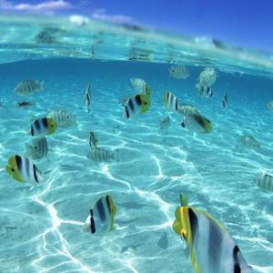 Snorkeling in the Riviera Maya